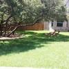 Buzy Bee'z Lawn & Treez